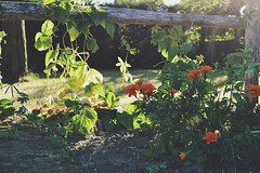 D (elleiriem) Tags: nature natura dettagli cose casuale fiori arancione verde suolo flores flowers