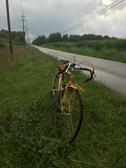 Parked in the clover (ddsiple) Tags: cycling jacktaylor clover pollinators