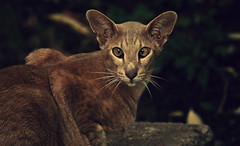 The hypnotist (aquigabo!) Tags: montreal nature fauna animal cat summer sunset dusk twilight dark canon eos aquigabo dsrl t5i rebel 700d 250mm hypnotist