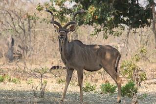 Namibia Dangerous Game Safari - Caprivi Strip 68