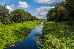 The Rhyne at Ham Wall (andymulhearn) Tags: dscrx100 rx100 sonyphotographing