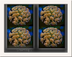 Dreaming (gillyan9) Tags: dreaming fleur flower rverie cration