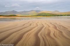 20160910-Sand Trails-0001.jpg (Pat_J1) Tags: greystonescameraclub fermoyle landsape sand flower flowers wicklow flickr