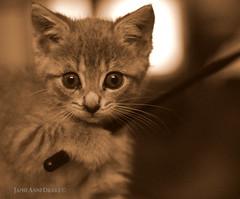 Kitteh (JamieDrakePhotos) Tags: kitten cat creative feline babycat animal pet