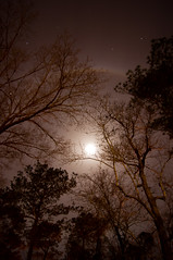 Backyard Full Moon (texsonsc) Tags: longexposure trees winter sky moon sc night stars backyard bare sony ring full fullmoon planets lowcountry moonring sonya55