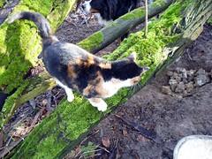 Miniputz supervises (stanzebla) Tags: cats katzen