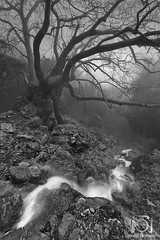 Whispers Long Forgotten (Stavros_Lmb) Tags: sunset sky bw white mist mountain black tree water fog clouds creek sunrise river landscape nikon long exposure hiking ghost greece crete past whispers blackwhitephotos d700