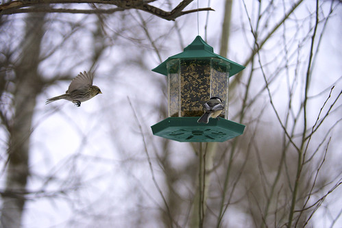 Feeder at Riverlot 56