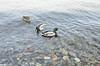 Isola dei pescatori (samuelloz) Tags: italien italy lake geotagged lago photo nikon europe italia photos lagomaggiore italië photograpy イタリア إيطاليا ιταλία d7000 nikond7000 d7000nikond7000