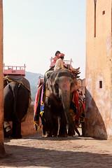 India // Rajasthan 2012-10-27