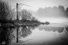 """Lonely Tree"" (GrafGregor) Tags: blackandwhite mist reflection tree ice fog landscape desolate"