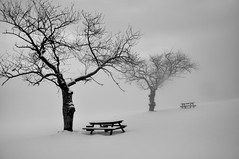 EternitY (Claudia Gaiotto) Tags: trees snow monochrome fog quiet silence
