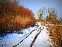 the snowy path (mujepa) Tags: road winter snow france reed way landscape track path hiver route neige lorraine sentier roseaux marly chemin mygearandme photographyforrecreation photographyforrecreationclassic