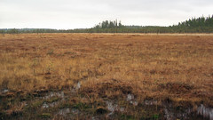 Riihineva (dusan.ovi) Tags: autumn nature grass forest suomi finland nationalpark swamp 2007 keskisuomi saarijrvi pyhhkki forestresort centralfinland pyhhkkinationalpark pyhhkinkansallispuisto pyhahakki