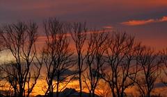 IMG_1745 Sonnenuntergang / Sunset (Traud) Tags: trees sunset germany bayern deutschland bavaria abend sonnenuntergang bäume traunstein