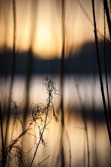 (drfugo) Tags: sunset sun lake reeds sussex bokeh reservoir ardingly canonef135mmf2lusm canon5dmkii