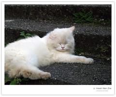 階梯上的白貓02 (Ache_Hsieh) Tags: travel cute digital cat taiwan olympus 基隆 jilong 金瓜石 e500 太子賓館 zd 轉角遇到愛 1454mm2835