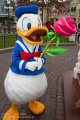 DLP Feb 2013 - Mickey and Friends celebrate Valentines Day (PeterPanFan) Tags: travel winter vacation france canon mainstreet holidays europe character disney donald valentines february feb mainst donaldduck valentinesday townsquare disneylandparis dlp mainstreetusa bemyvalentine disneylandresortparis disneycharacters disneycharacter marnelavalle mainstusa 2013 mickeyfriends parcdisneyland disneyparks canoneos5dmarkiii disneylandparispark seasonsholidaysandevents