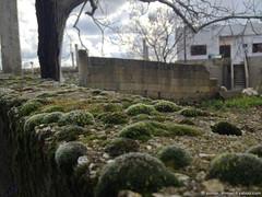 ... (somar ahmad) Tags: home by entrance taken syria algae moisture  mosses lattakia jableh   somar baabda alamara hameda gableh  latakiyah b3abda ladhiqiyah  alladhiqiyah somarahmad  latakiagovernorate