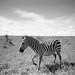 ©Kenya Ministry/FAO / FAO