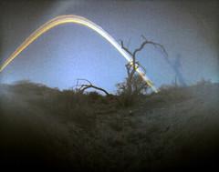 (28.dans.later) Tags: arizona tree desert papernegative beercan pinholecamera ilfordmgiv solargraphy 022613030513