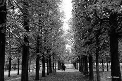 A Walk in the Park (idashum) Tags: travel nikon bravo europe ida shum d800 idashum idacshum idacshumphotography tpslandscape tpstravel