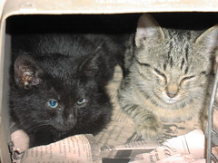 Cat Colony trap and release - Kittens (strib10024) Tags: feralcatcolony catsnycity catcolonyupperwestside