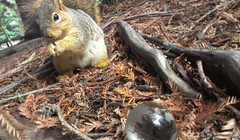 Sphere and Squirrel (thirdblade) Tags: lighting light glass composition ball berkeley woods squirrel warm sphere ucb