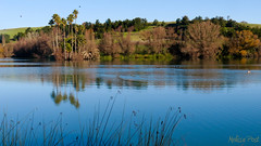 Like Spring (San Francisco Gal) Tags: california ca blue lake plant reflection tree reed nature water birds landscape palm napa dirosapreserve dirosa magicmomentsinyourlifelevel2