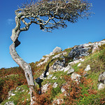 "Bog Tree <a style=""margin-left:10px; font-size:0.8em;"" href=""http://www.flickr.com/photos/89335711@N00/8595166219/"" target=""_blank"">@flickr</a>"