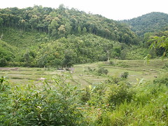 """Farming at landscape level by Karen farmers, Northern Thailand • <a style=""""font-size:0.8em;"""" href=""""http://www.flickr.com/photos/94121135@N04/8596511759/"""" target=""""_blank"""">View on Flickr</a>"""