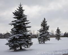 Snow-Covered Trees (kimindergand) Tags: park trees winter snow tree colorado snowstorm parks evergreen aurora snowfall winterwonderland evergreentree