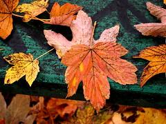 (ela_s) Tags: park prima listopad jesień liście ławka archiwum aprilis jesienne canons90
