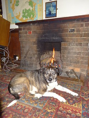 Hot Dog (Bricheno) Tags: arran island isleofarran scotlandinminiature clyde estuary firth firthofclyde bricheno brodick hotel ormidalehotel dog fire scotland escocia schottland écosse scozia escòcia szkocja scoția 蘇格蘭 स्कॉटलैंड σκωτία