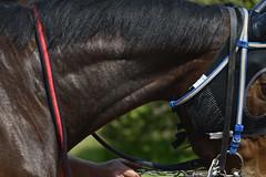 20130405-_DSC4176 (Fomal Haut) Tags: horse japan nikon nagoya 80400mm d4   14teleconverter  d800e