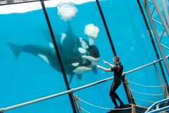 Huff & puff (koalie) Tags: man france water animal tank killerwhale antibes trainer marineland biot provencealpesctedazur