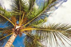 Punta Cana - Feb 2013 (Desy Cheng) Tags: trees vacation sun beach paradise sony palm resort punta cana rx100