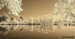 reflections (Kris Kros) Tags: california ca camera morning bridge brown sun lake reflection tree photoshop ir photography duck nikon raw wildlife reserve tokina filter processing infrared kris sunburst d200 van oaks sherman sepulveda kkg hoya woodley brownish nuys r72 cs6 kros kriskros kkgallery irsepvda