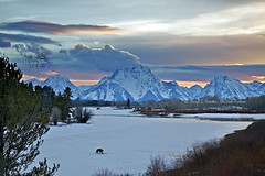Grizzly Bear, Sunset, Oxbow Bend (Daryl L. Hunter - The Hole Picture) Tags: sunset usa landscape unitedstates wildlife wyoming grandtetons jacksonhole grizzlybear grandtetonnationalpark oxbowbend mtmoran grizzly610andcubs