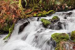 Wahkeena Creek (rianklong) Tags: longexposure green water oregon creek landscape waterfall or rapids mossy columbiarivergorge wahkeena verdent wahkeenacreek nationalscenicarea columbiarivergorgenationalscenicarea canoneos5dmarkii canon5dmarkii canonef2470mmf28liiusm