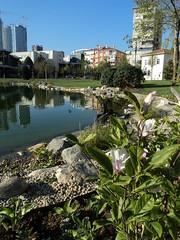 Gztepe 60. Yl Park (emir bakan) Tags: park tulip tulipa iek bitki havuz gemi lalezar lale mevlana akvaryum eme balk gztepe glbahesi glet oyunpark sarlale beyazlale krmzlale oyunalan morlale sarkrmzlale gztepe60ylpark ocukalan sugsterisi