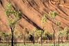 Australie - Uluru - 2 (jf garbez) Tags: voyage travel tree rock flora nikon australia unesco mount uluru nikkor arbre mont rocher roche flore nationalgeographic northernterritory australie ayersrock oceania d600 ulurukatatjutanationalpark 2485mm unescoworldheritagesites océanie nikond600 patrimoinemondialdelunesco territoiredunord nikonpassion nikonflickraward nikkor240850mmf3545
