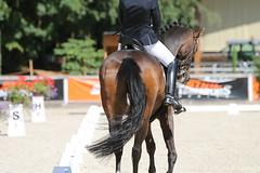 IMG_7661 (dreiwn) Tags: dressage dressur dressuur pferd reitturnier turnierreiten pferdesport horse horseback horseriding equestrian reitverein dressurprfung kandare doublebridle reiten pferde reitplatz ridingarena
