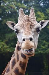 Ouwehands Dierenpark (Hugo Sluimer) Tags: dierenpark ouwehandsdierenpark rhenen dierentuin zoo ouwehands