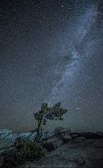 depth_8100698 (steve bond Photog) Tags: yosemitenationalpark nikon nighttime nightscape milkyway california stevebondphotography stevebond tree depth seetheworld stars starscape nationalpark