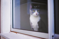 Through the Window (Welcome to imagination) Tags: kitten cat window imagination nikon nikond610 50mmf18 light outdoor animal pet eyes cute