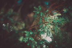 IMG_1086 (Lee Fany) Tags: vietnam dalat dalatcity love danang trees art leefany linhngoctruong deep summer alonetime canon beautiful cinematic natural