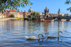 Boat Trips (Fotos4RR) Tags: moldau vltava schwan schwne swan brcke karlsbrcke charlesbridge karlvmost prag prague praha fluss river bridge