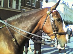 Police horse - chirpy character. (tikvah.) Tags: horse equine police cop city equis fuzz mounted thursday