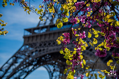 Eiffel Tower in the Spring (anoopbrar) Tags: france paris eiffel tower eiffeltower tourdeeiffel landcape architecture building icon iconic monument pari trocadero art artistic sunrise sunset outdoor bluehour urban city clouds longexposure picturesque twilight explore landscapephotography night long exposure dusk citylights travel travelphotography fineart sun beautiful europe surreal ancient history beautifullandscape town landscape blue hour nature buildings sky sunlight cities